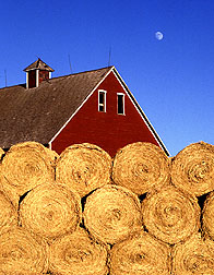 photo/ Agricultural Research Services