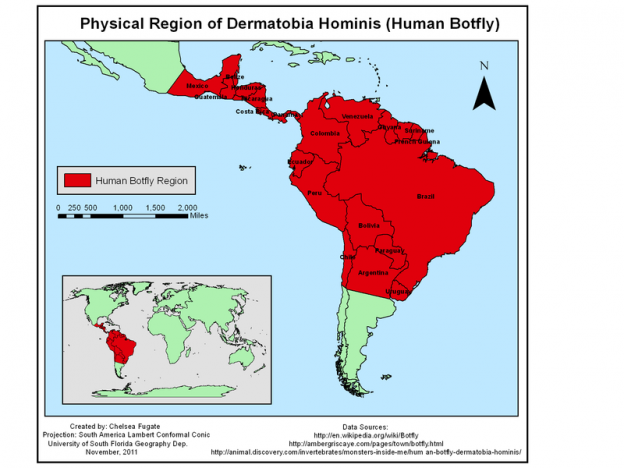 This map depicts the physical region of the human bot fly.Image/Chelsea Fugate via Wikimedia Commons