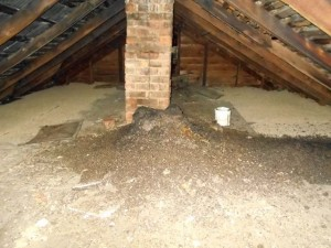 Large amount of guano accumulation in attic Image/Michael Korski, Get Bats Out