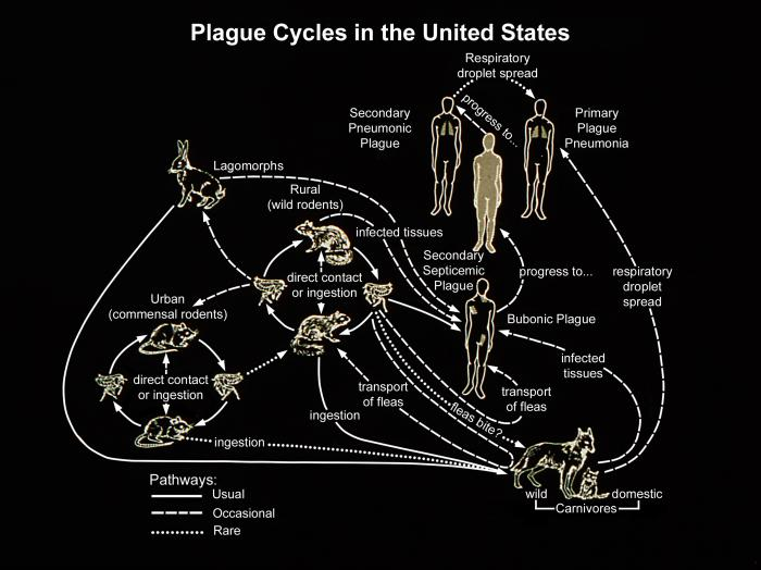 Plague cycles in the US Image/CDC