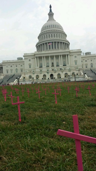 Students for Life prolife pink crosses US capitol