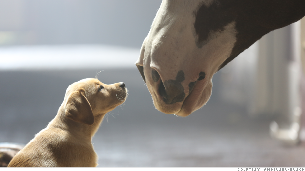 Budweiser Super Bowl Puppy Love ad golden retriever Clydesdale