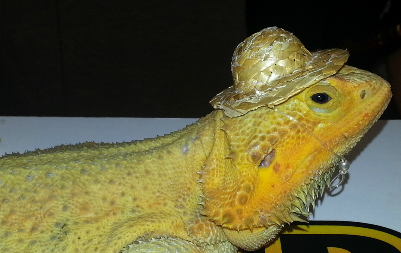 Exotic Small Pets Reptiles Turtles Snakes Fish Rodents Mo Pictures to ...