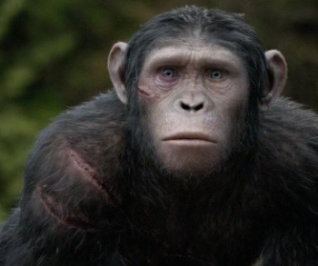 Nick Thurston as Blue Eyes Dawn of the Planet of the Apes photo