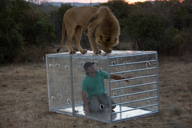This one-hour special provides an in-depth look into the lions' unique physical attributes, their complex hunting strategies and their intricate hierarchy. The show follows Boone Smith across the Nambiti Game Reserve, as he tracks a lion coalition as they hunt and search for a mate, ultimately putting him face to face with them in The Box.