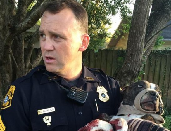 Tampa police find pit bull mix shot and barely alive  photo/ Tampa Police Department supplied