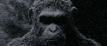war-for-the-planet-of-the-apes-snowy-tease-photo-caesar