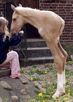 oh-my-god-this-has-to-be-the-weirdest-horse-i-have-ever-seen