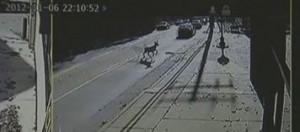 deer crashes through carpet store