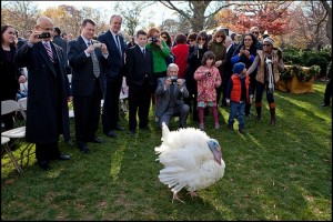 President pardons a pair of turkeys official White House photo