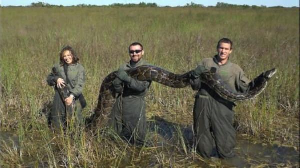 Burmese python killed Florida YouTube screenshot