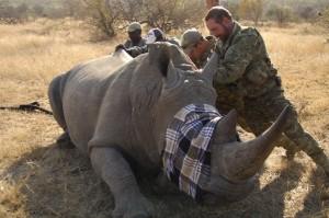 battleground-rhino-wars photos