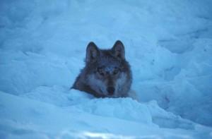 Image/ U.S. Fish and Wildlife Service
