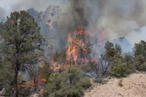 Wild fire are consuming Arizona and sadly 19 firefighters have lost their lives. photo 2012 Poco Wildfire in Tonto National Forest   US Dept of Ag