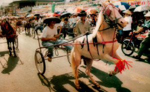 Plaridel Horse Festival photo http://www.bulacan.gov.ph/