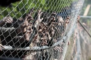 the-walking-dead-season-4-episode-2 walkers push fence in