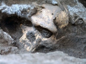 This 2005 photo provided by the journal Science shows a pre-human skull found in the ground at the medieval village Dmanisi, Georgia. The discovery of the estimated 1.8-million-year-old skull of a human ancestor captures early human evolution on the move in a vivid snapshot and indicates our family tree may have fewer branches than originally thought, scientists say