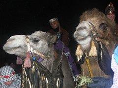 Camel procession Christmas Wonderland