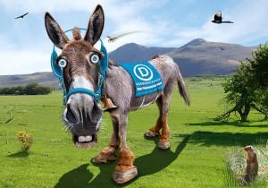 photo donkeyhotey donkeyhotey@wordpress.com