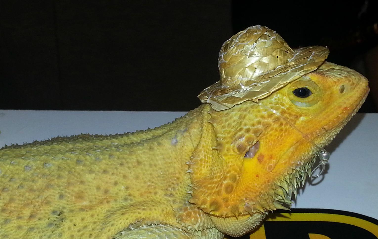 Repticon 2014 Reptiles And Exotic Pets Take Center Stage