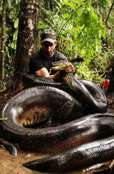 'Eaten Alive' photo supplied by The Discovery Channel