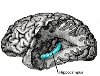 Hippocampus/Public domain image