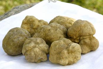 White truffles photo courtesy of Casatruffle