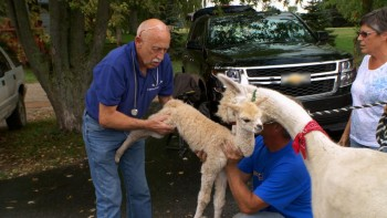 Dr Pol season 8 animal examiniation photo