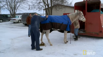 Dr pol treating a horse
